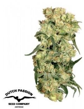 Dutch Passion - Freddy's Best