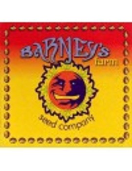 Barneys Farm - Laughing Buddha - Regular 10