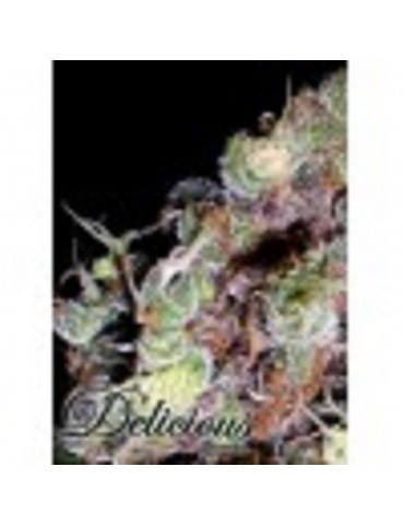 Delicious Seeds - Cotton Candy - Feminized 5