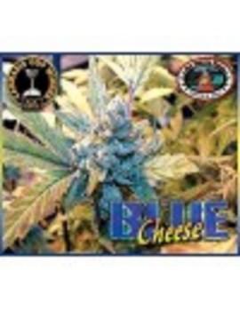 Big Buddha Seeds Blue Cheese - Feminized 10