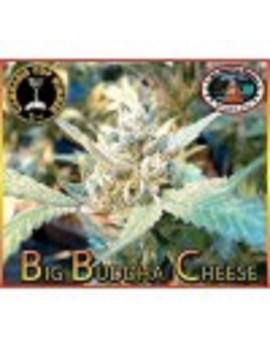 Big Buddha Cheese - Feminized 10