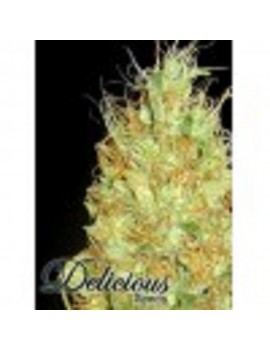 Delicious Seeds - Fruity Chronic Juice - Feminized 5