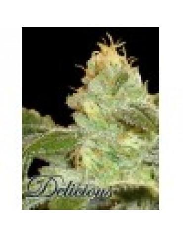 Delicious Seeds - La Frutta Di Venus - Feminized 5