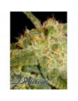 Delicious Seeds - La Bella Afrodita - Feminized 5