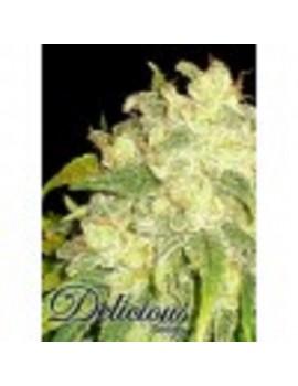 Delicious Seeds - Il Diavolo Automatic - Feminized 5