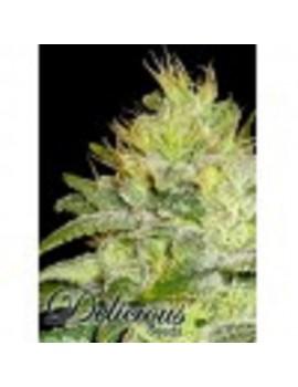 Delicious Seeds - La Musa - Feminized 5