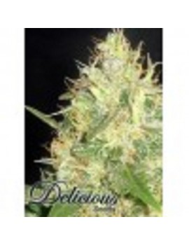 Delicious Seeds - Northern Light Blue - Feminized 5