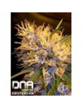 DNA Genetics - Super Cannalope - Regular 13