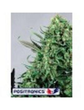 Positronics Seeds Purple Haze #1 - Feminized 5