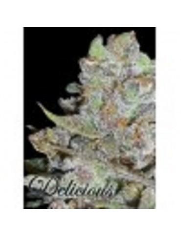 Delicious Seeds - La Diva Automatic - Feminized 5